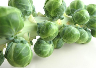 PRINCE MARVEL F1 Hybrid Brussels Sprout