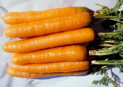 CAPE MARKET Carrot