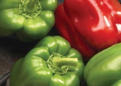 DOUBLE UP F1 Hybrid Sweet Pepper