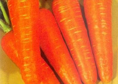 KURODA (SAKATA) Sakata Selection Carrot