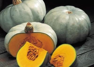 NELSON F1 Hybrid Grey Pumpkin
