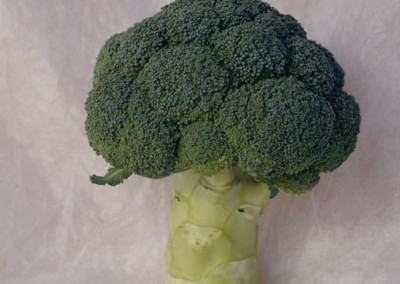 PARTHENON F1 Hybrid Broccoli