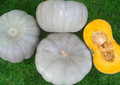 SAMPSON F1 Hybrid Grey Pumpkin