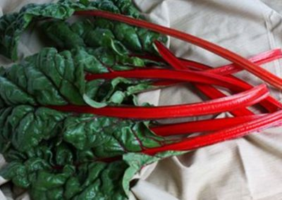 Rhubarb Open Pollinated Swiss Chard
