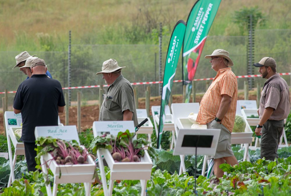 Sakata Seeds Open Day a Huge Success