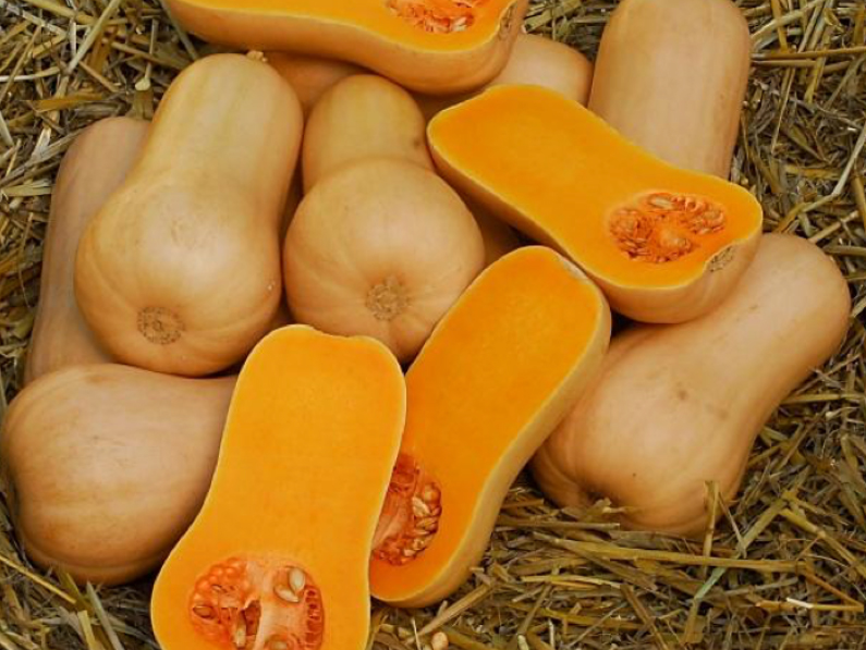 Mature butternut squash