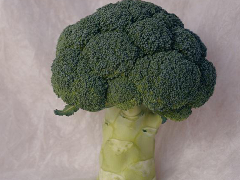 Brassica Seed Quality