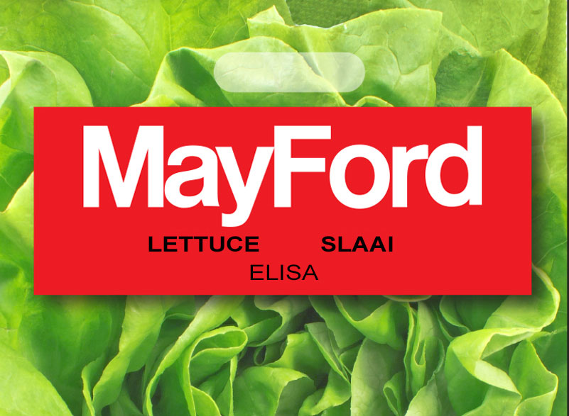 Elisa butter lettuce featured