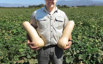 New butternut Titan* – living up to its name