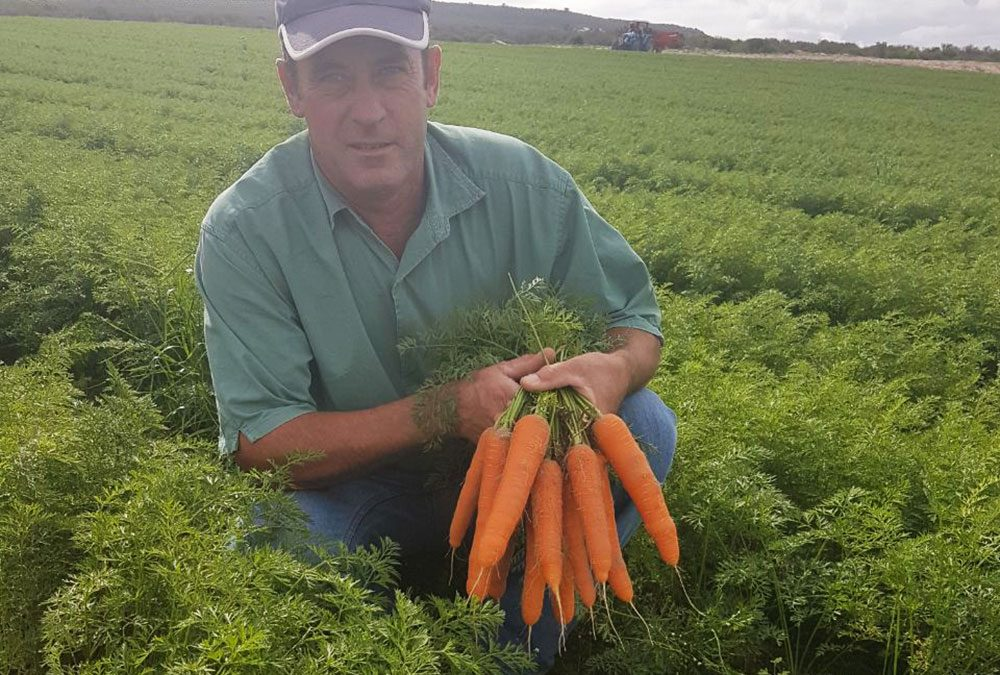 Laastedrift Farming Group loves carrot, Carvora*