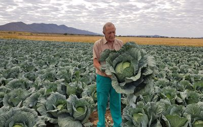 Grandslam is a grand choice for cabbage producer in Namibia