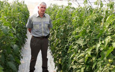 New tomato Nerine*