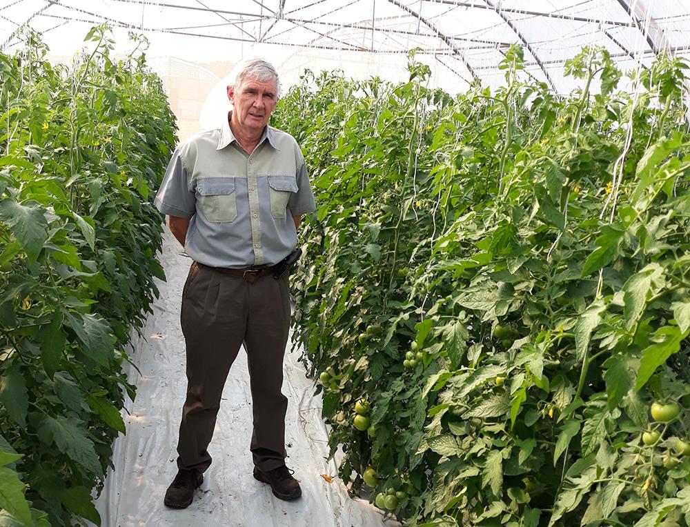 Shane Gower Nerine tomatoes