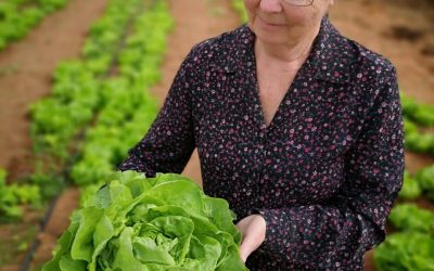 Elisa Butter Lettuce – A success story