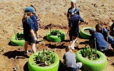 Curro Monaghan – Veggie Garden