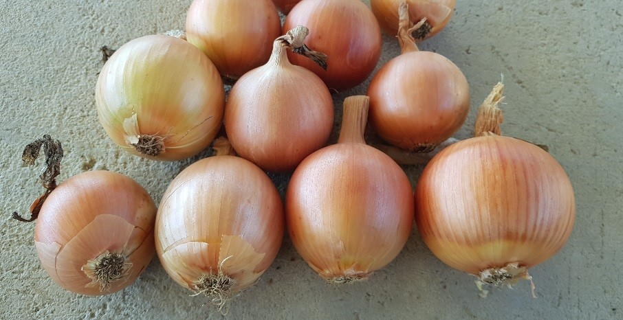 Nothern Cape Onion Producers Association