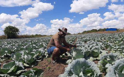 Conquistador – Panuka Farm in Zambia